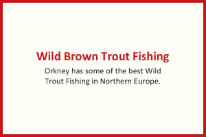 Wild Brown Trout Fishing